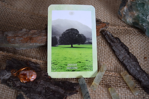 Oracle : Guidance des arbres (FR/ENG)  The Tree's Guidance, Oracle.
