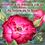 Thumbnail: Initiation à la Thérapie par les Roses au Temple des Roses