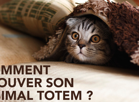 Comment trouver mon Animal Totem ?