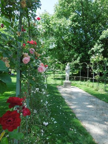 2. Rose rouge   .jpg