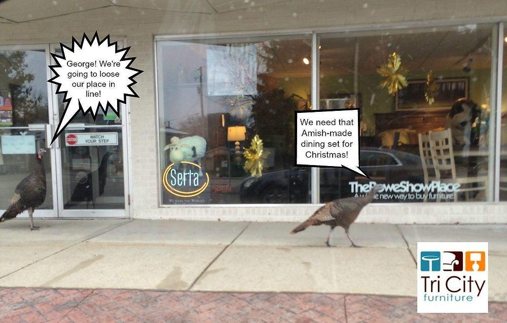 Actual Turkeys looking in TriCity Furniture windows