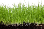 bigstock-Grass-and-soil-on-a-white-back-