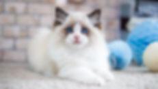 playing little cat .jpg