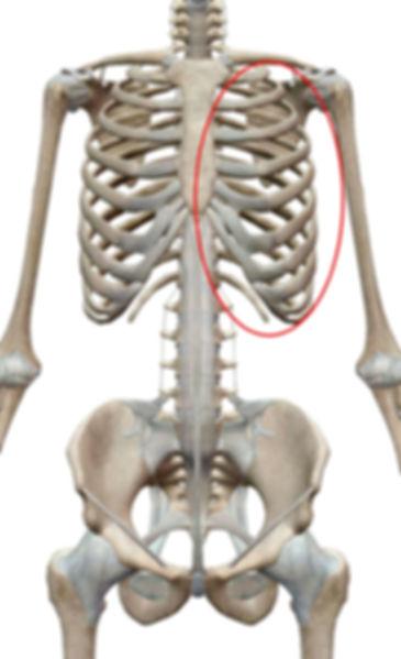肋間神経痛.jpg