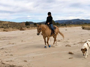 Hefner learning to be a trail horse. He'