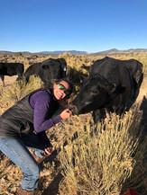 Andrea's cow Cinderella