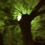 Dark Forest 1