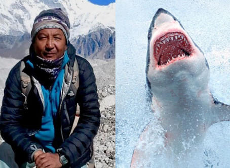 Sherpa v Shark. Why we should always strive to be dead right!