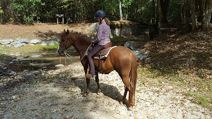 OOPs Tennessee Walking Horse Gelding for sale