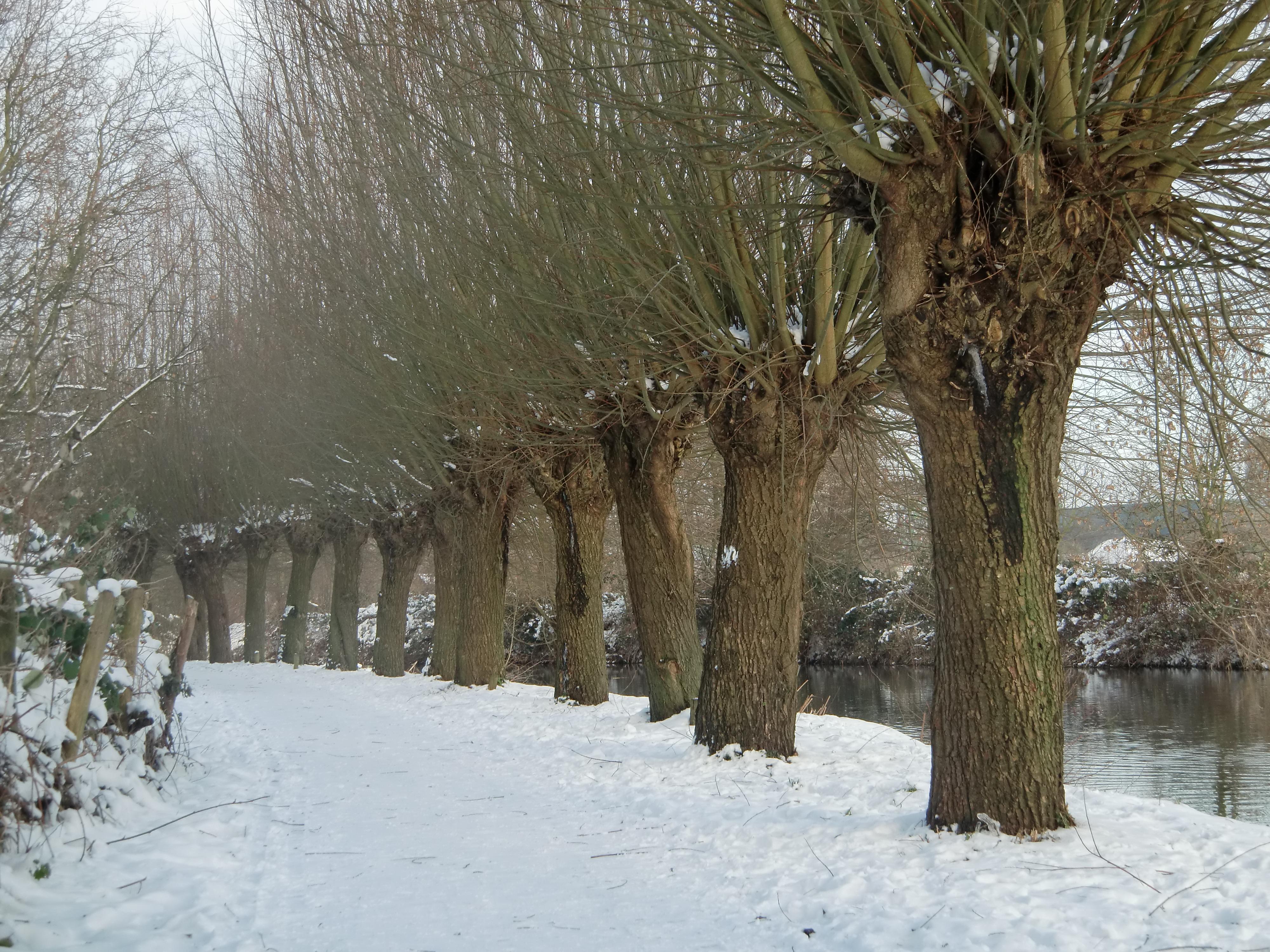 Winters jaagpad bij de Kromme Rijn Utrecht.