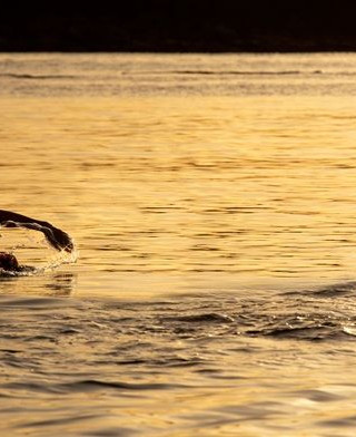 Nadar em vão