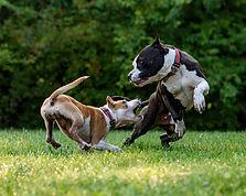 FCJ-Forrest-Cressy-James-Law-Firm-Personal-Injury-Dog-Bite.jpg