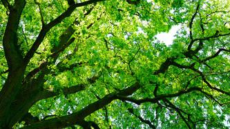 Do Trees Feel?