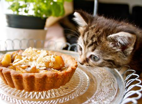29.02|13.00|Яблочный пирог