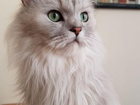Котик дома: Кис-Кис
