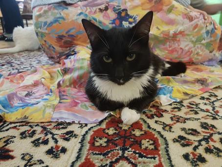 Котик дома: Вася