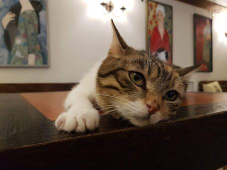 Котик уехал: Мишка