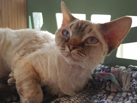 Котик дома: Ида
