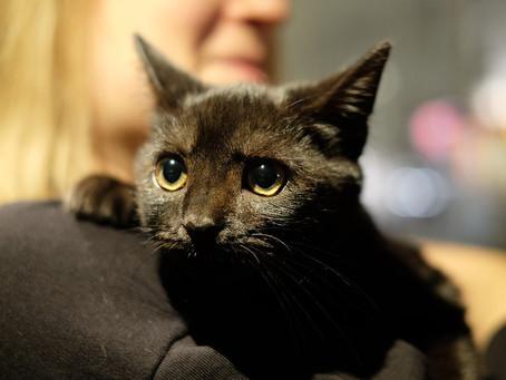 Котик дома: Черныш