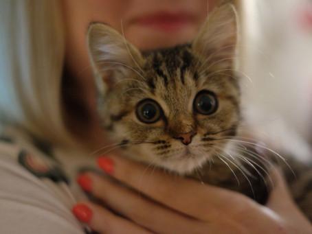 Котик дома: Креветка