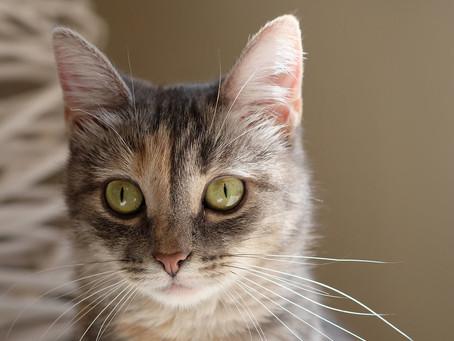 Новый котик: Агнешка