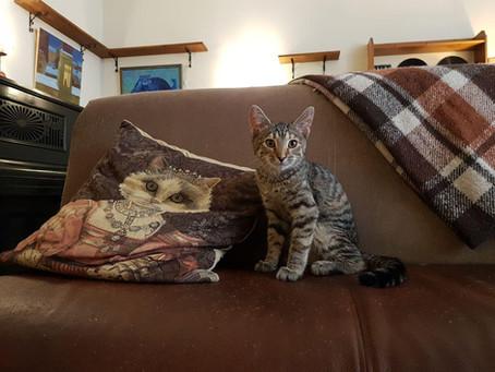 Новый котик: Даша