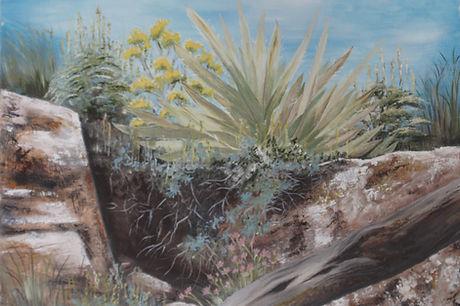 DSC_0004 bright angel agave 1.jpg
