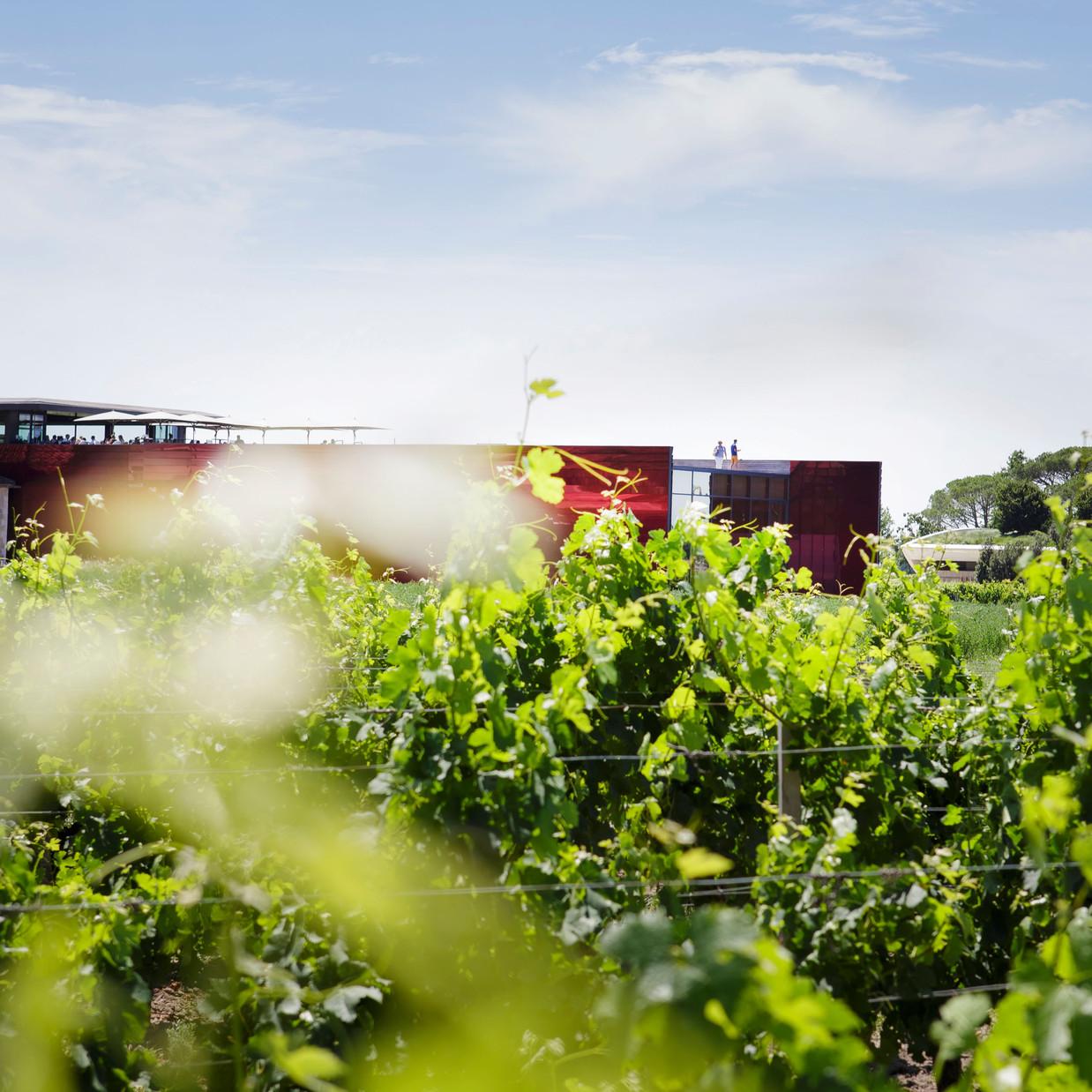 La terrasse rouge - Saint Emilion