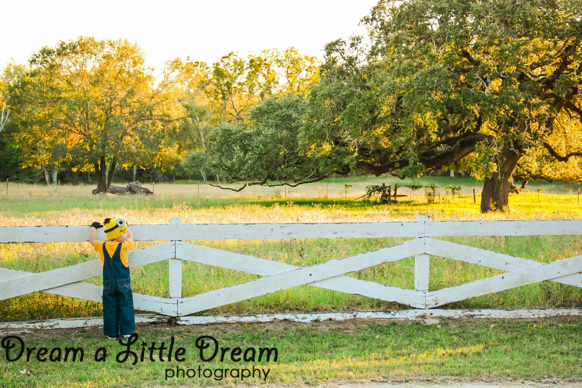 dream a little dream photography