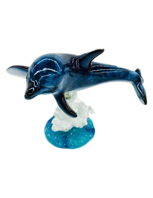 Dolphin on Coral
