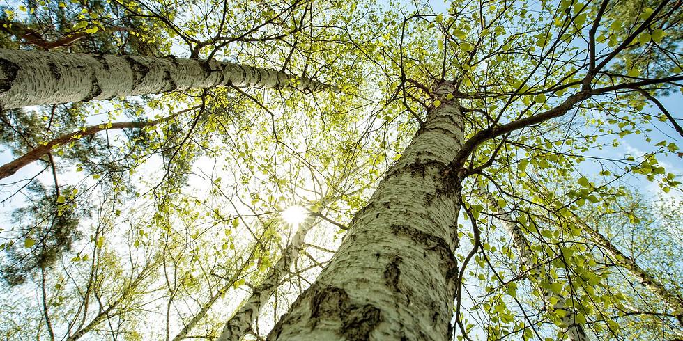 Lichtblick - Resilienz und Meditation für krebskranke Menschen