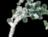 jazmin-quaynor-8ioenvmof-I-unsplash_edit