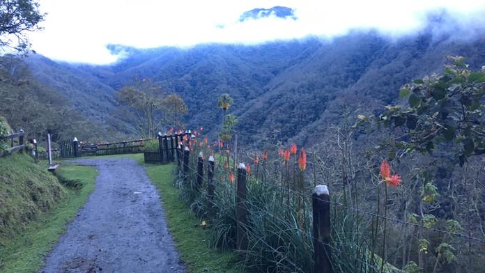 Valle de Cocora (Quindio)