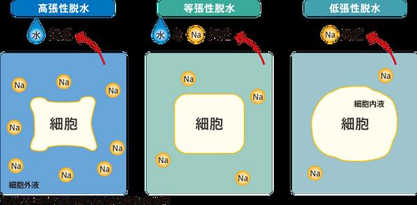 脱水の分類.png