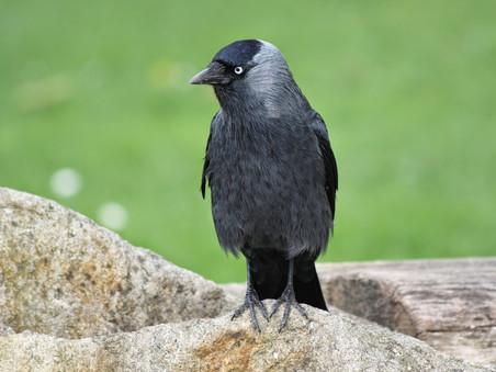 Vergassen van vogels uit den boze