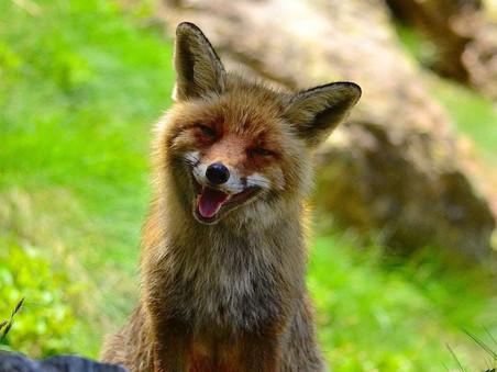 Bezwaar tegen afschieten vossen gegrond verklaard.