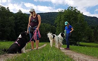 Gruppenspazieränge mit Hund