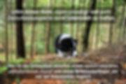 BATWELPE (3).jpg