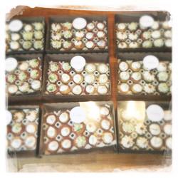 Cours Cupcakes salés '16 XII