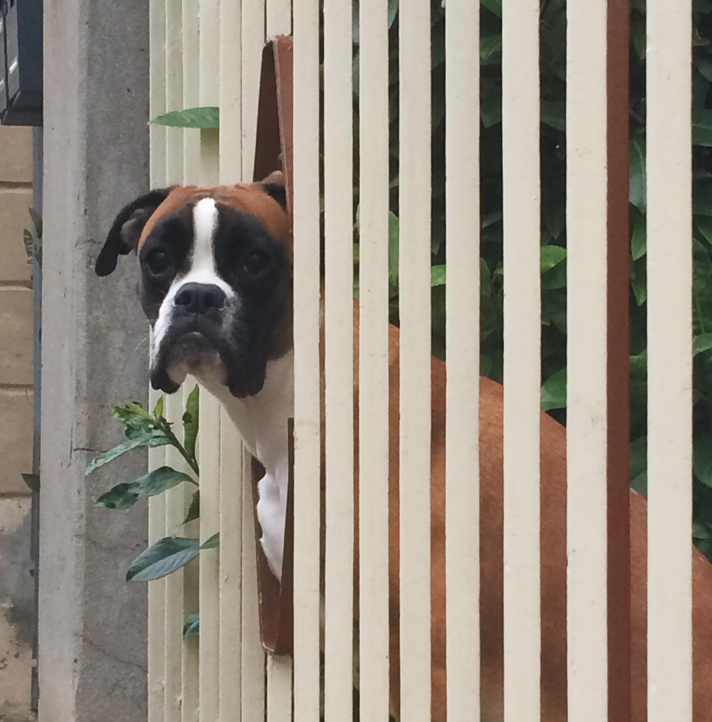 San Giovanni | who let the dogs out?