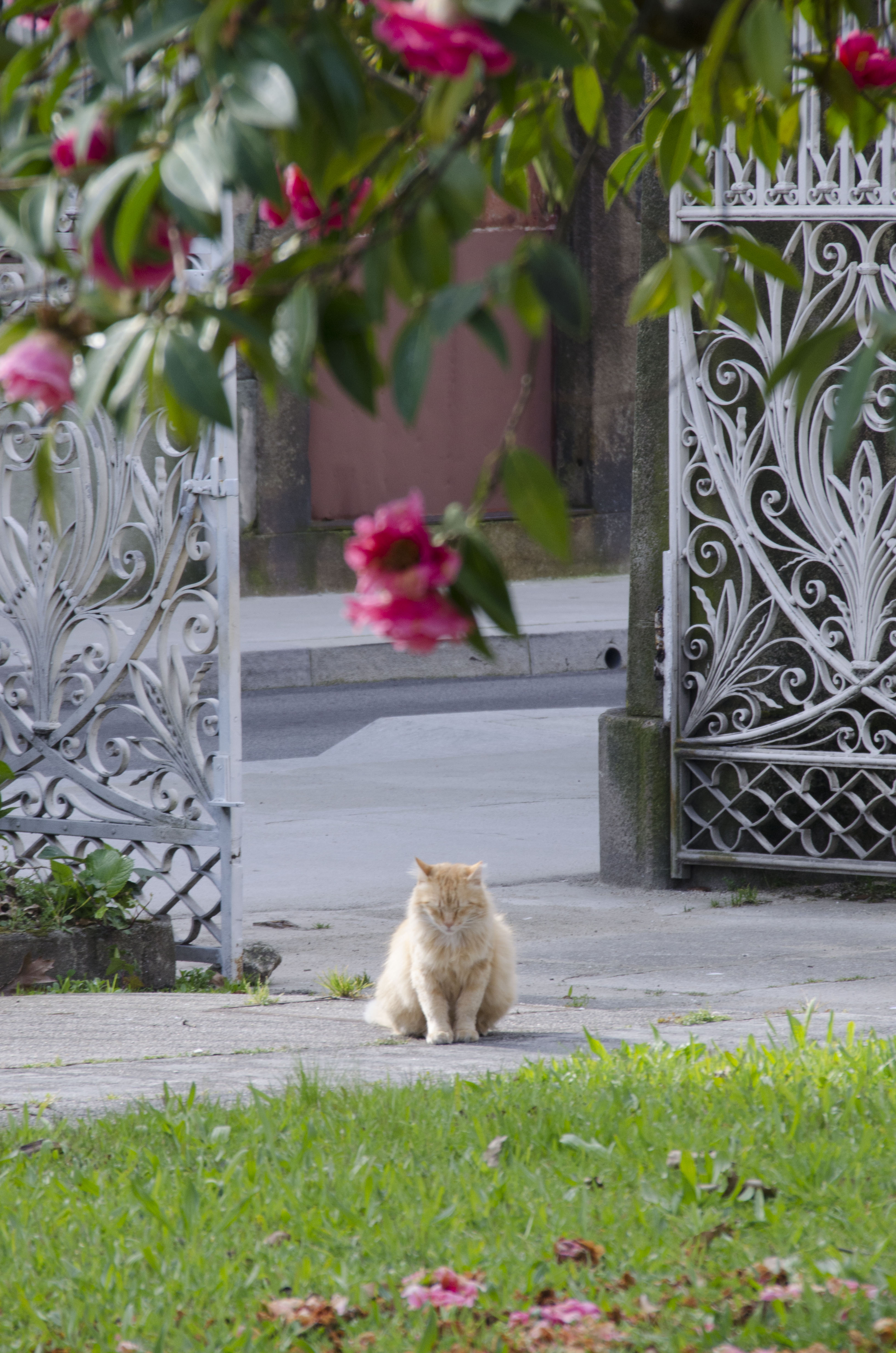 Porto | royal cat