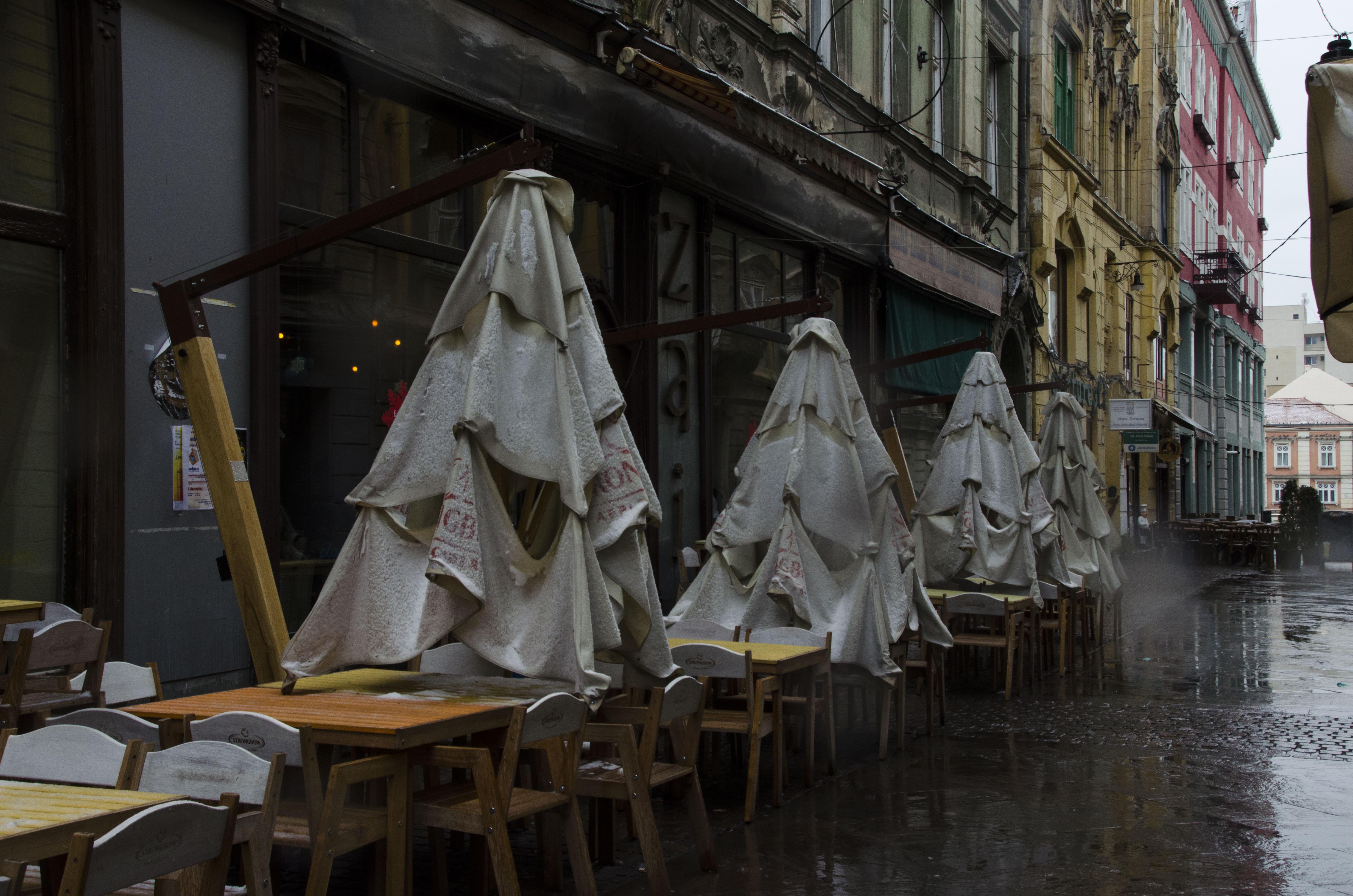 Romania | wet christmas trees