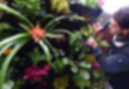 Vertical Garden - Melbourne - Up The Wall Vertical Gardens - About Us