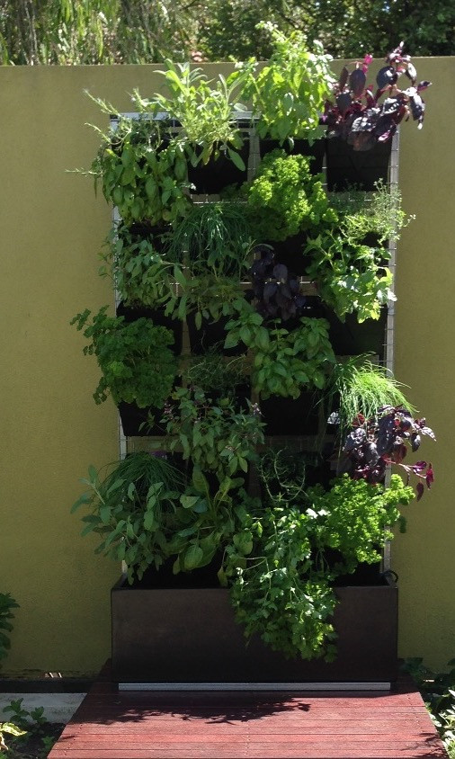 Herbs grow so well in Vertical Gardens!