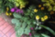 Vertical Garden - Melbourne - Up The Wall Vertical Gardens - Photo Gallery