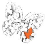 butterfly-1_edited.jpg