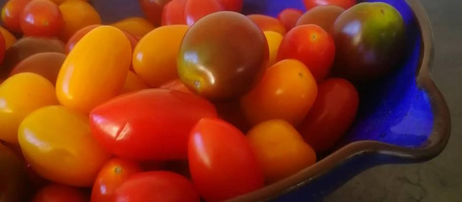 Små ovala söta tomater