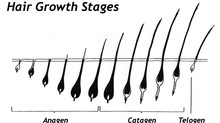 Understanding hair growth for eyelash extensions