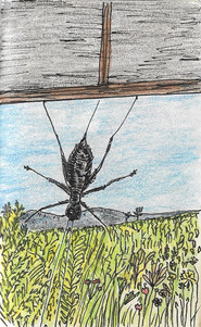 cricketcricket