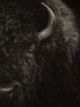 Buffalo Painting Art Black and White